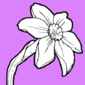 How to Draw a Narcissus Flower with Easy Step by Step Drawing Lesson