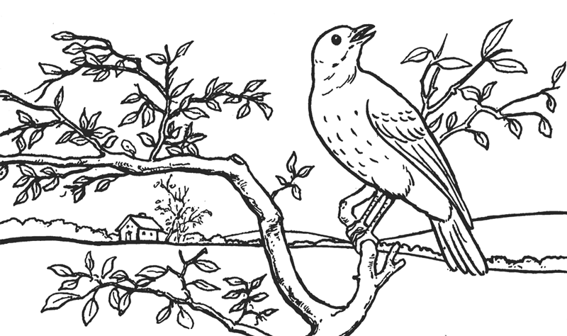 How to Draw a Bird in a Tree in Front of Rolling Hills Landscape Drawing Tutorial