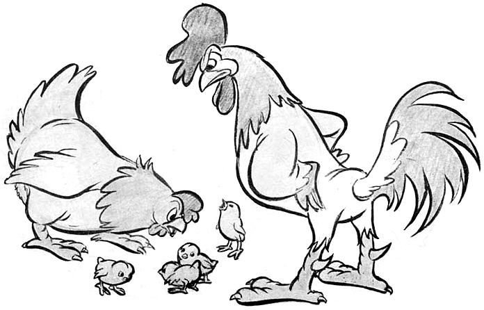 finished drawing of chicken parents mother hen father rooster and baby chicks